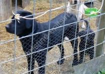 vorn: Whitey, 8 Monate alt, hinten: die Mama