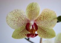 Orchidee, Herrenberg, Canon EOS 300 D