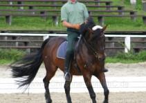 Achim Kessler, der Lehrgangsleiter auf seinem Pferd