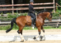 Corina auf ihrem Pferd Rigo Bacardi www.welsh-gestuet.de