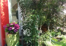 Hortensie, Säulenkirsche, Paprika im Pavillon