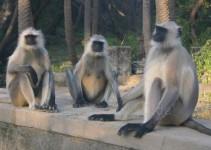 Affengang auf einer Brücke