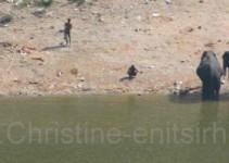 Baden der Elefanten bei Jaipur