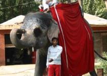 Elefantenbesitzer in Mumbai