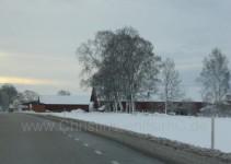 die letzten roten Häuser und Birken
