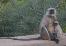 Mama mit Kind bei Agra