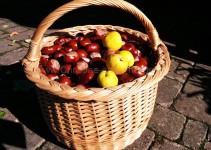 Kastanien und Zierquitten (Handybild