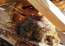 Vogelnest in Holzbeige