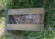 Kasten an der Eiche, festes Nest
