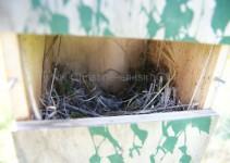 Kasten an der Linde, loses Nest