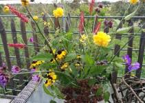 Bunte Mischung aus eigenem Garten