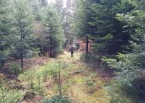 Rest-Stamm als Brennholz mitnehmen