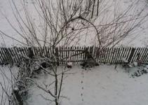 Zwetschgenbaum und Weidenbogen