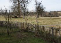 Weidenbogen und Zwetschgenbaum sowie werdende Kopfweide