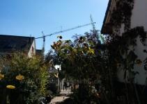 Sonnenblumen und Sonnenfänger