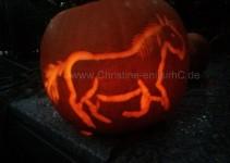 Pferd leuchtet